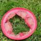 Rat Terrier 2,199 : Frisbee 0