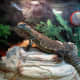 Exotic lizards have differing light, heat and habitat requirements.