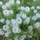 my-oklahoma-flower-gar