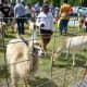 Creekfest petting zoo fun