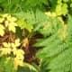 Colored plants