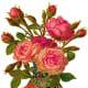 Vintage pink roses in ornate vase clip art