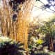Beautiful stand of bamboo