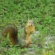 funny-short-squirrel-stories