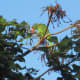 May 17, 2012: Better camera, 7PM when sunset's later. Coral trees provide munchies.