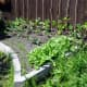 Raised vegetable plot backfilled with soil, planted up with a mix of summer and winter crop vegetables.