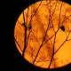 Full moon on Halloween