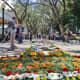Flower Carpet 2019