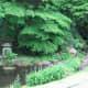 The small lake and stream, Tamozawa villa.