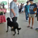 Farmer's Market at Imperial Sugar Land…well behaved dogs on leashes welcomed there.