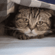 Figure 13. Cat is hidding under a piece of cloth.