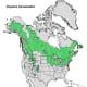 Quaking Aspen Tree Range Map