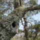 hanging-rock-state-park-danbury-nc
