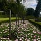 The beautiful rose gardens.