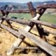 Buck and Rail fencing. This is the predominent type of fencing in this area of the country.