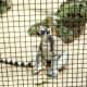 Ring-tailed lemur from Madagascar
