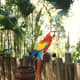 This parrot also did tricks