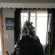 Wrap two industrial-sized trash bags around the tree.