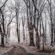 Printable forest scene