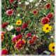 Mixed wildflowers