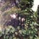 Lush vegetation near Rainbow Falls