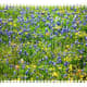 photos-of-bluebonnets-and-other-texas-wildflowers-in-the-spring