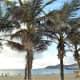 The palm-backed beach of Playa de las Canteras.