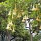 Trumpet flowers in Parque Doramas.