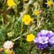 Some beautiful alpine flowers near the top
