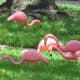 pink-flamingos-and-kitsch-art