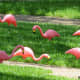 Plastic flamingos in our neighbor's yard