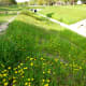 Greenbelt, drainage ditch and wildflowers by Peggy W