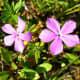 More diminutive flowers