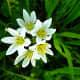 Tiny little flower