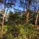 Hobe Sound Scrub Preserve, Florida