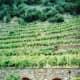 Entrance to AR.PE.PE. Winery