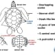 Parts of the carapace