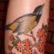 Bird Tattoo, Tacho, Thou Art Custom Tattoo And Piercing Studio, Sheffield, England