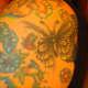 Koali, sakura, & my butterfly (Ash)