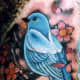 bluejay-tattoos-and-designs-bluejay-tattoo-meanings-and-ideas-bluejay-tattoo-pictures
