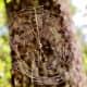 A beautiful spiderweb