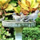 Birdbath merriment