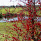 Wetland garden view