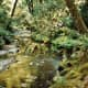 The Redwood Creek in Muir Woods National Monument near San Francisco