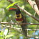 You just have to see the tropical birds in Costa Rica.
