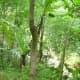 Surrounding of Tiklas Falls Resort.