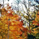 reflections-of-autumn-warm-colors-harvest-time-fireplaces-and-savory-stews