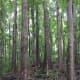 The author enjoying the beauty of Mahogany Forest.