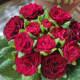 Primula 'Belarina Valentine'