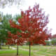 More fall-colored trees on our greenbelt